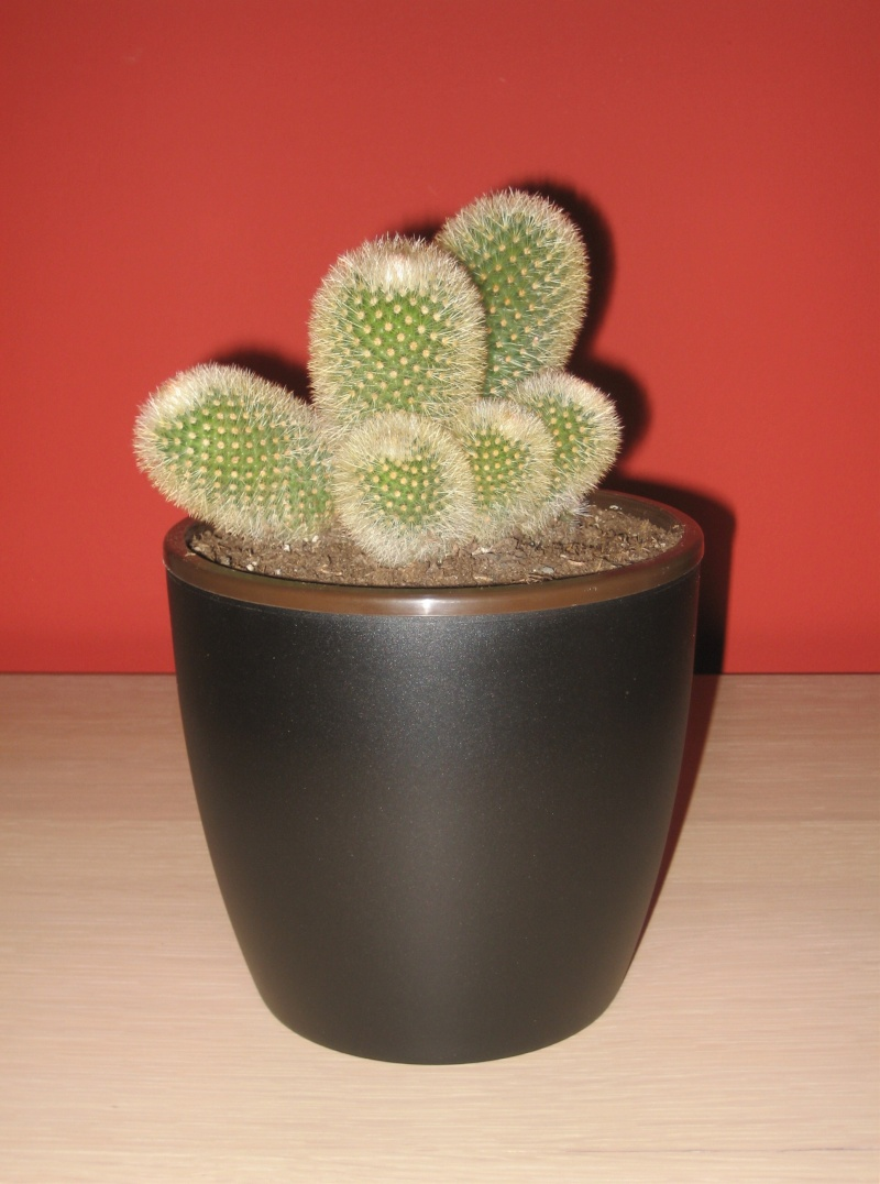 Quelques cactus à identifier SVP - Merci Img_0511