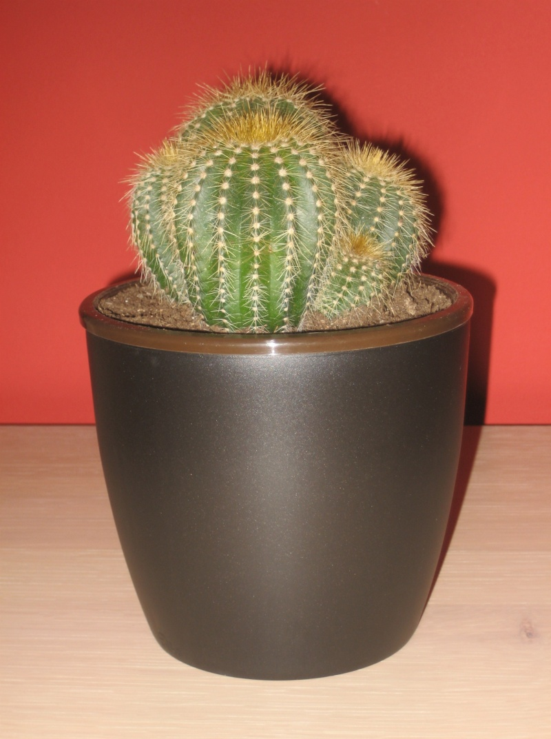 Quelques cactus à identifier SVP - Merci Img_0513