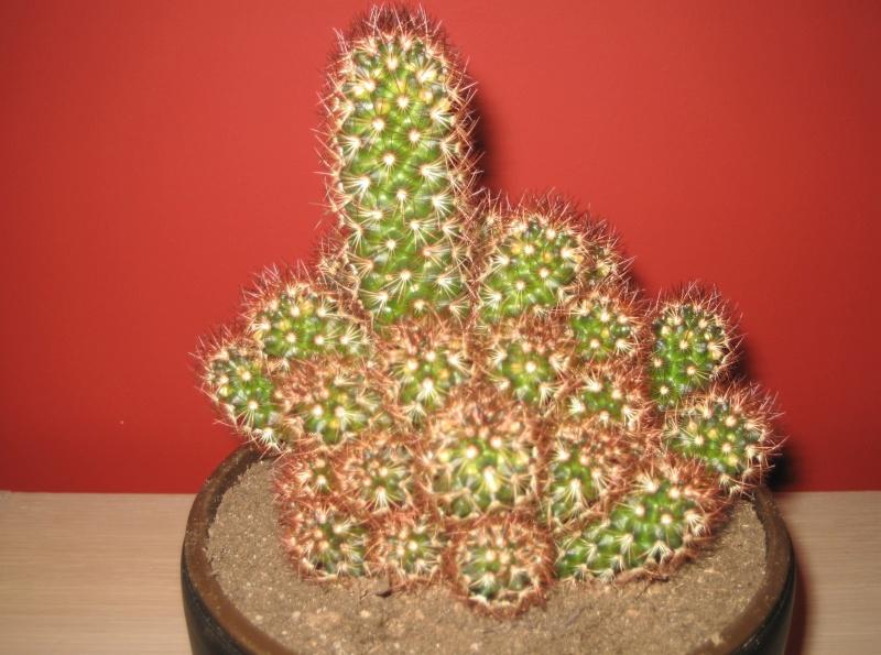 Quelques cactus à identifier SVP - Merci Img_0514