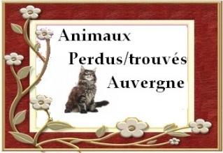 Animaux perdus/trouvés en Auvergne Cadre_10