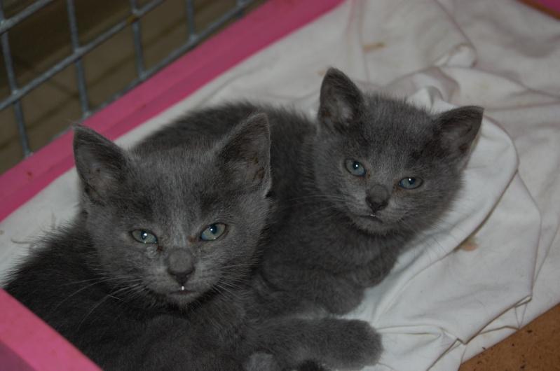 [Chatons adoptées] 4 chatons (3 gris et 1 noire) et leur maman (noire) dans l'Oise - Page 2 Dsc_0611