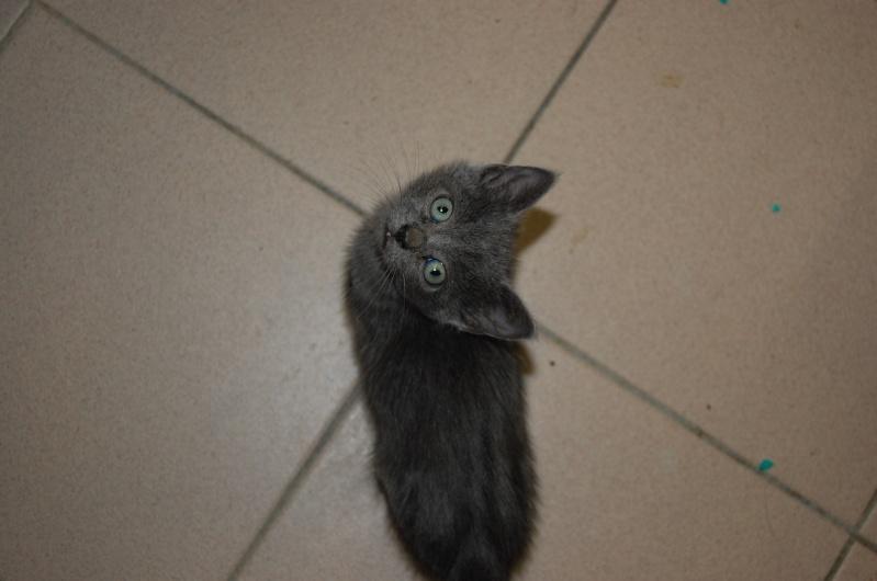 [Chatons adoptées] 4 chatons (3 gris et 1 noire) et leur maman (noire) dans l'Oise - Page 2 Dsc_0612