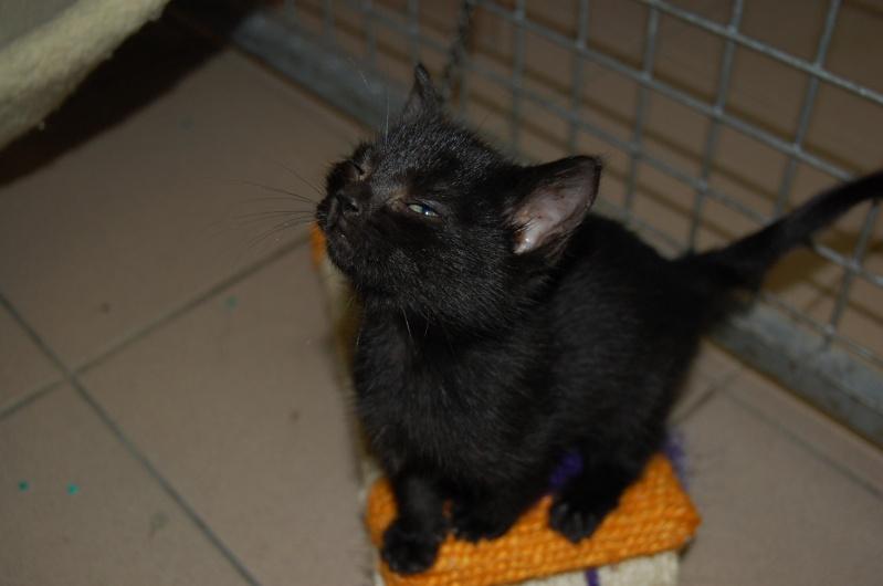 [Chatons adoptées] 4 chatons (3 gris et 1 noire) et leur maman (noire) dans l'Oise - Page 2 Dsc_0710