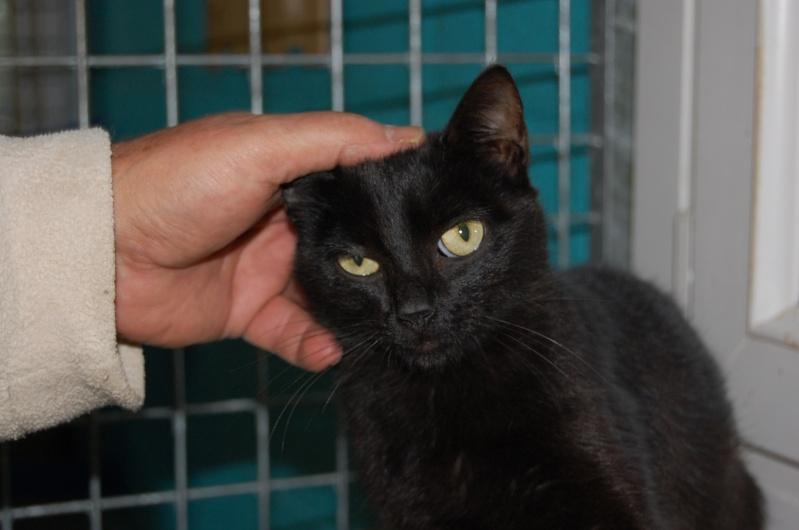 [Chatons adoptées] 4 chatons (3 gris et 1 noire) et leur maman (noire) dans l'Oise - Page 2 Dsc_0711