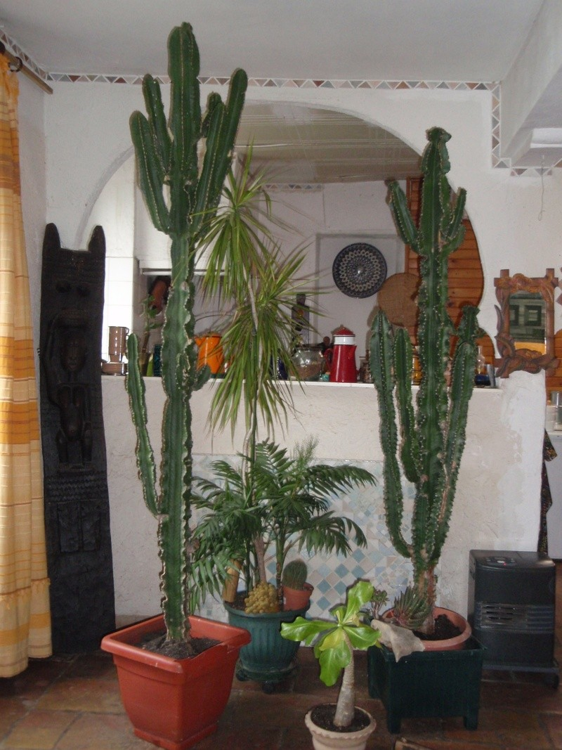 "mes""petits"" cactus P4040010"