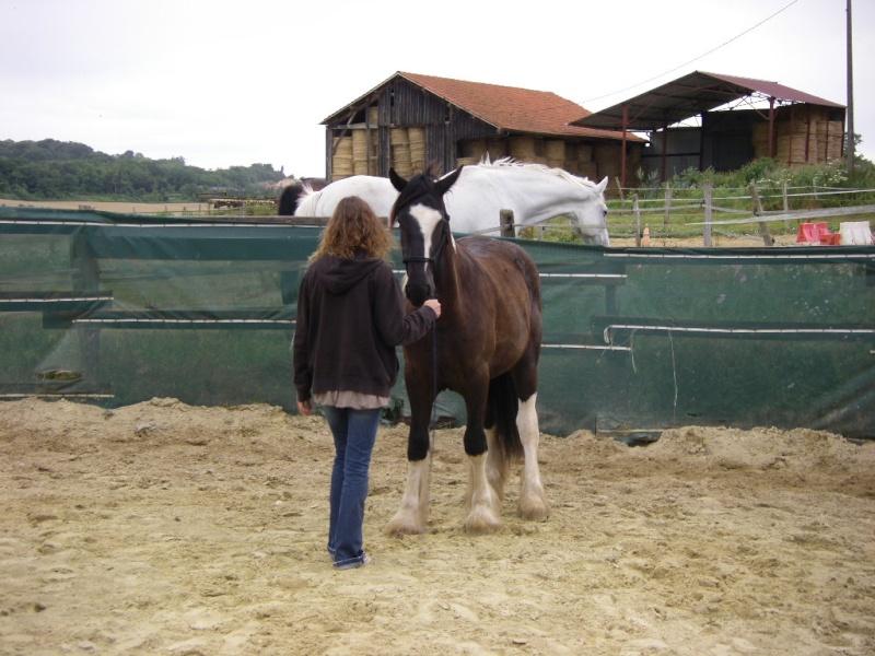 Saillant (Flo) et Damabiah (Emilie) rendent visite à Legend et Hermine ! Imgp4126