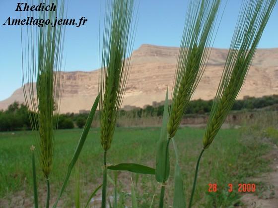 Photos tamazirt Dsc00218