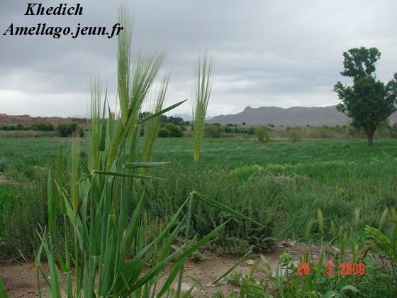 Photos tamazirt Dsc00223