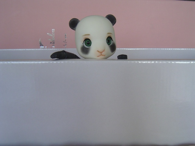 Tao & Mao (AE Panda & Pipos Ringo) Tao le retour (p.5) Dsc03522