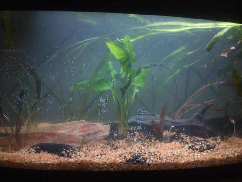 mon 1er et début d'aquarium 110