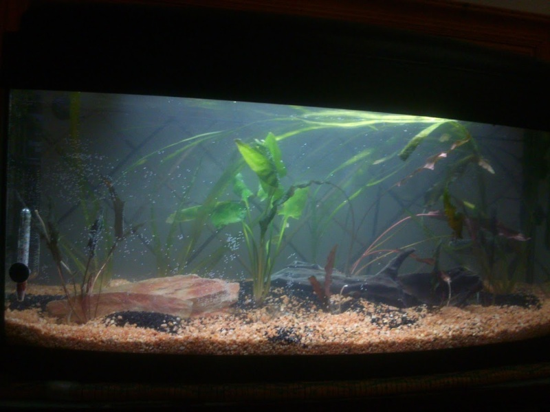 mon 1er et début d'aquarium 210