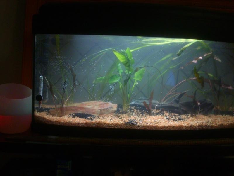 mon 1er et début d'aquarium 310