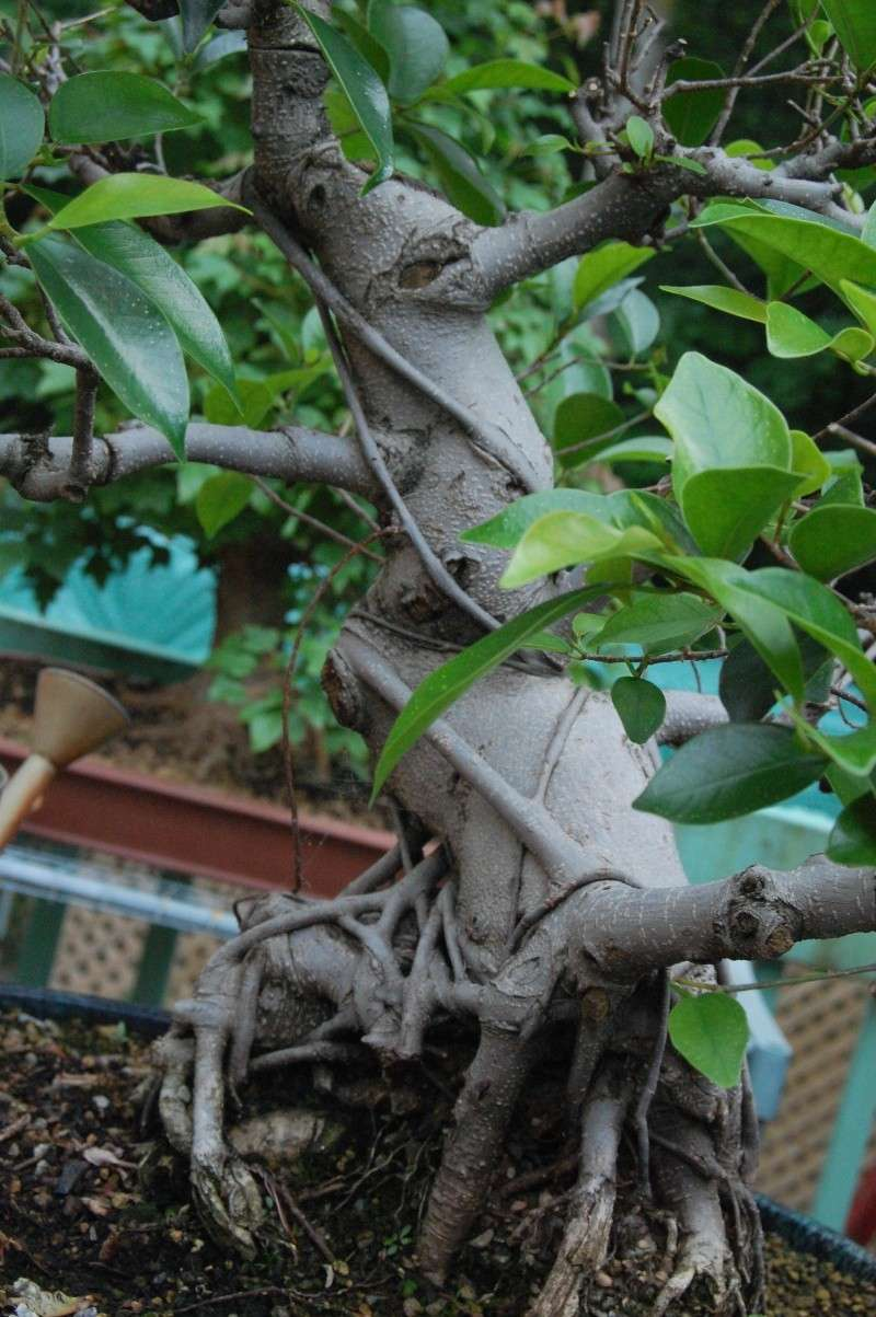 Photo d'arbre Dsc_0010