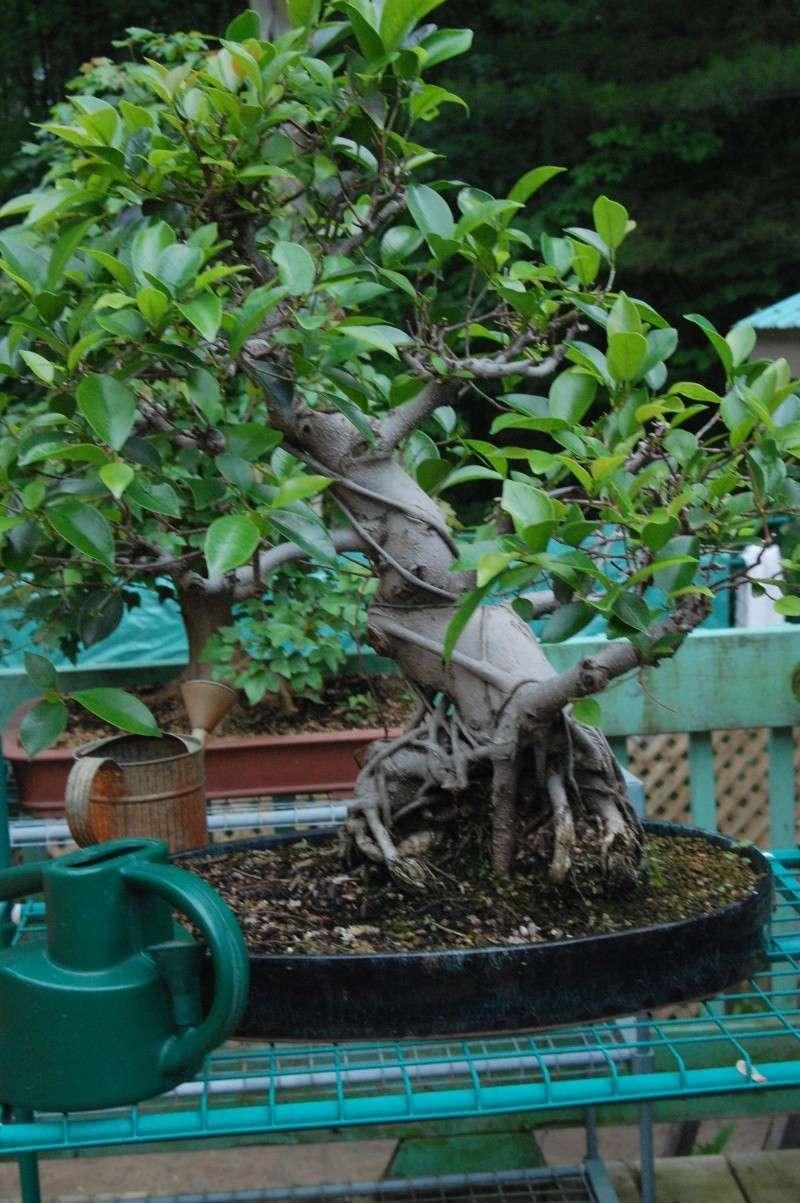 Photo d'arbre Dsc_0011