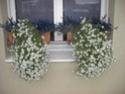 Fleurs pour balcon Cimg1215