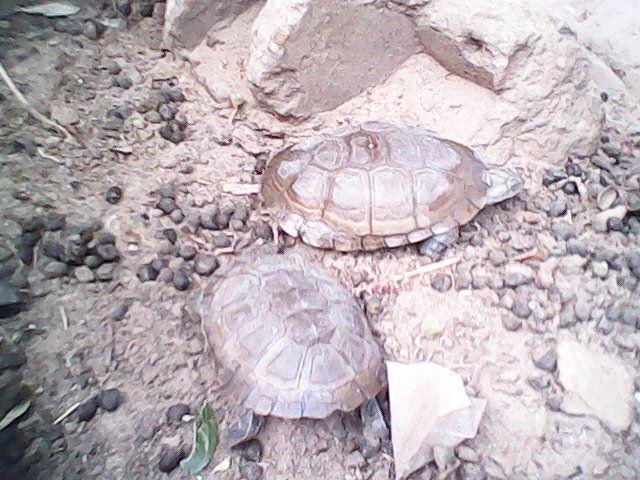 Sénégal 2012 41931510