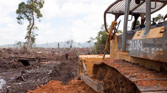 """Kalaweit: préservation des gibbons """" indonésie """" déforestation pour huile de palme, disparition des orang Outans Borneo12"""