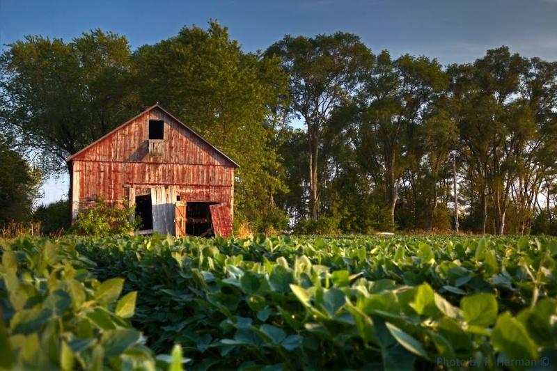 Etats-Unis : les granges à tabac (séchoirs), reliques d'une activité à l'abandon 75426710