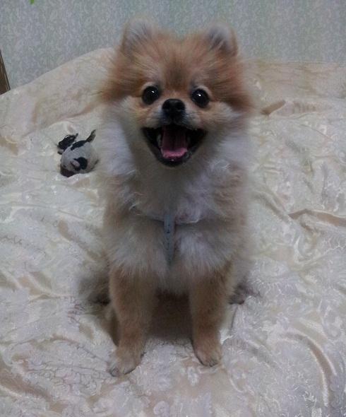 Vos chiens et leurs harnais! Photo  - Page 2 20130529