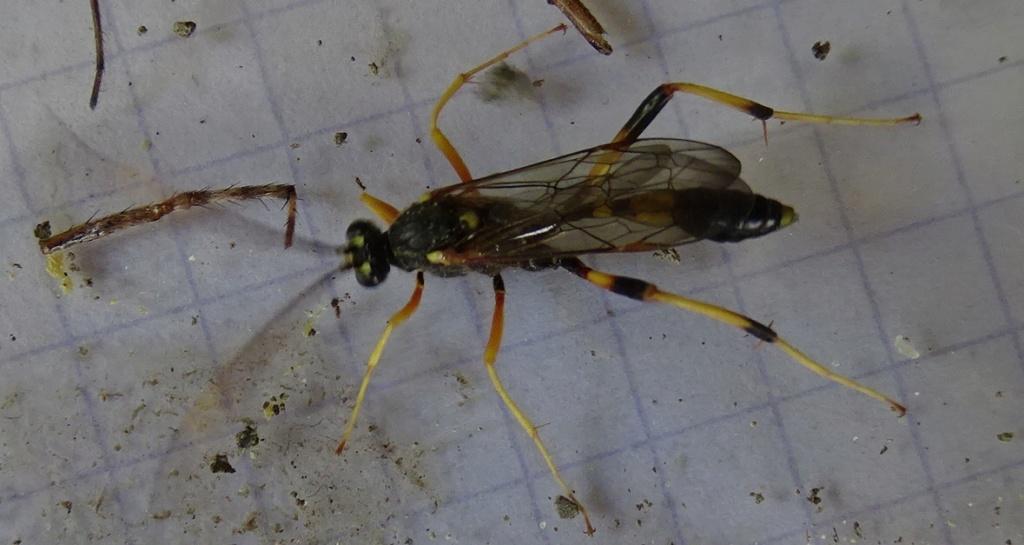 Identification nid  Dsc02010