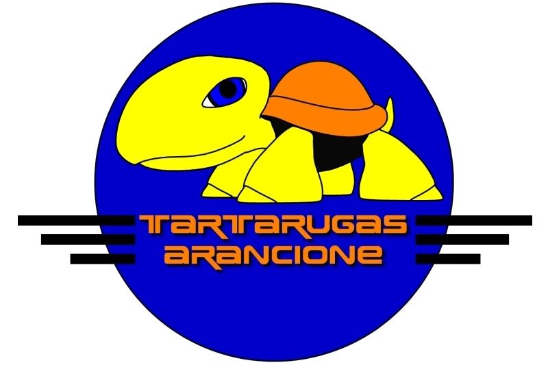 Orange turtle Tartar10