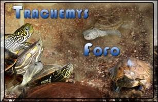 trachemys, graptemys, malaclemys, pseudemys, chrysemys et deirochelys