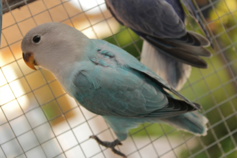 Mes opaline Turquoise Img_2112