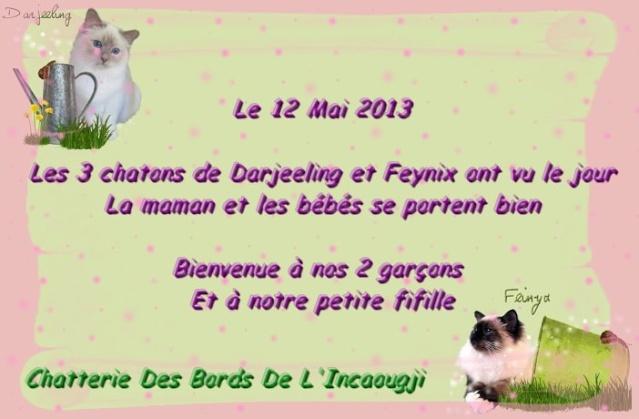Mariage  Darjeeling et Feinyx 2013 aux Bords de l'Incaougji - Page 2 26025610