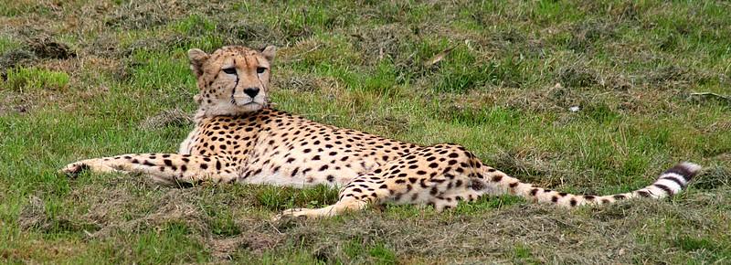 Sortie Animaux au Zoo d'Olmen le 16 août - Les photos Img_3410