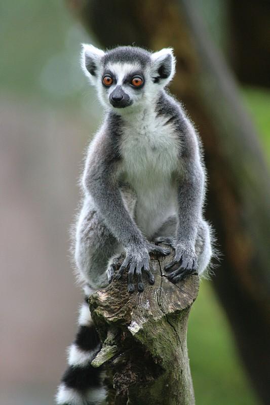 Sortie Animaux au Zoo d'Olmen le 16 août - Les photos Img_3411
