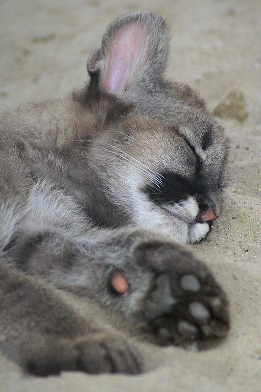 Sortie Animaux au Zoo d'Olmen le 16 août - Les photos Img_3610
