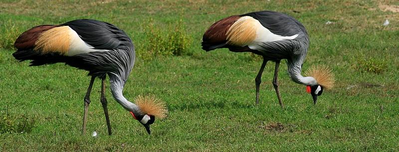 Sortie Animaux au Zoo d'Olmen le 16 août - Les photos Img_3712