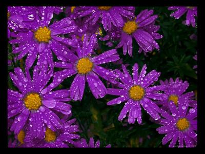 Sanny...la figlia dei fiori! - Pagina 3 Jzaw-110