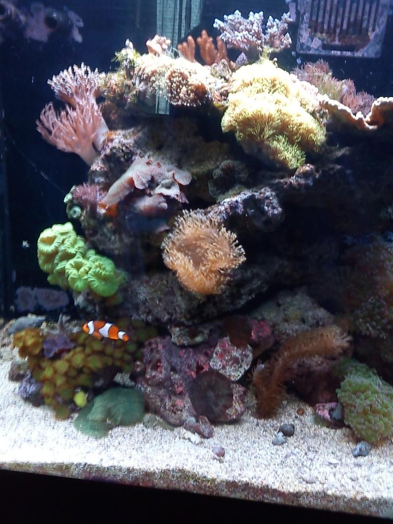Le red sea 130 d'hopaline59 - Page 4 Dsc00419