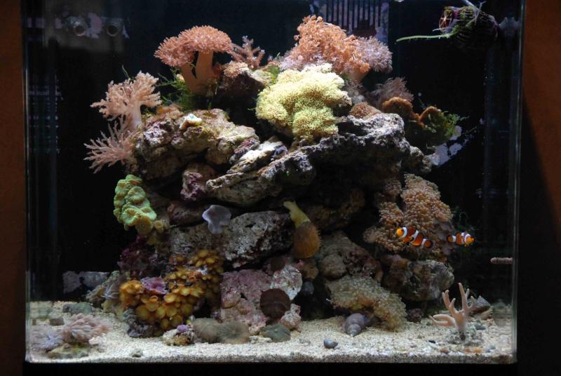 Le red sea 130 d'hopaline59 - Page 2 Dsc_0020