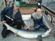 Best fishing Wexford to Wicklow information Shark110
