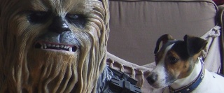 Buste 1.1 Chewbacca... - Page 3 Sv109124