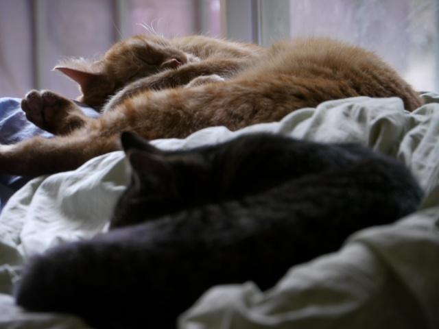 4 chatons (Mélisse, Vanille, Cacao, Saphran) P1000510