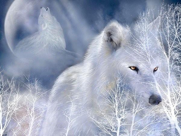 Créatures fantastiques au grès de la toile 2013-2014 Loup_013
