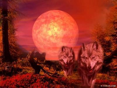 Créatures fantastiques au grès de la toile 2013-2014 Loup_015