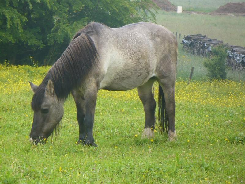 BISCOTTE -  ONC Poney née en 1983 - Protégée GPLV - Page 2 Biscot18
