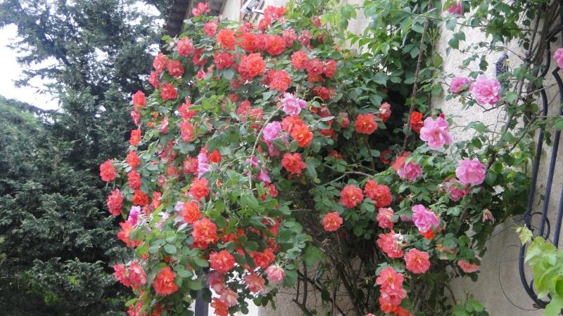 PHOTOS FLEURS FRUITS PERSOS DE DANA - Page 20 Fleurs14