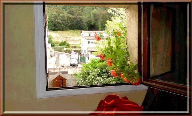 PHOTOS FLEURS FRUITS PERSOS DE DANA - Page 20 Roses_12