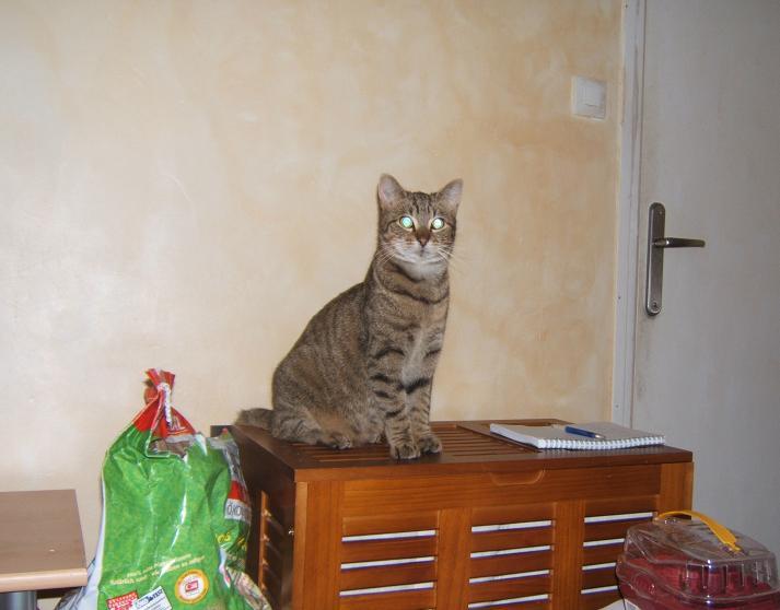 Arthur, 2.5/3 ans, attend depuis 1.5 ans! Arthur16