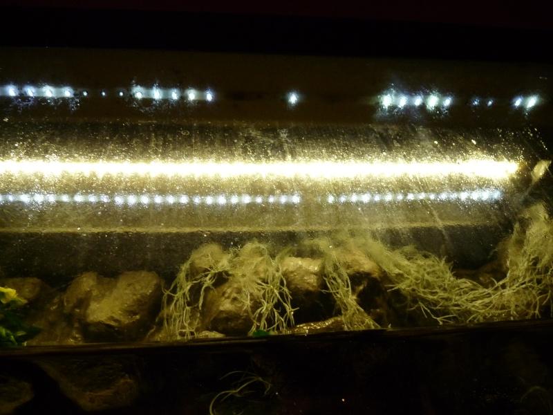 Rampe LED pour moins de 60€ P1080211