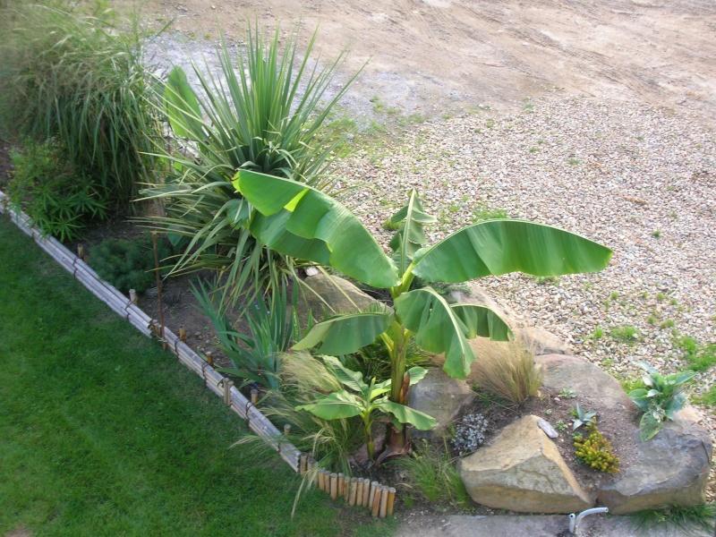 Les feuilles géantes du jardin Dscn1713