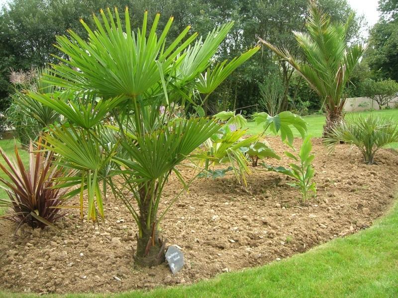 Palmier en danger Dscn1730