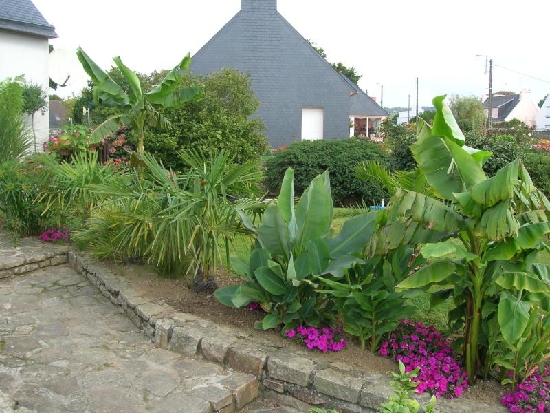 Le jardin de chez mes parents. Dscn1734