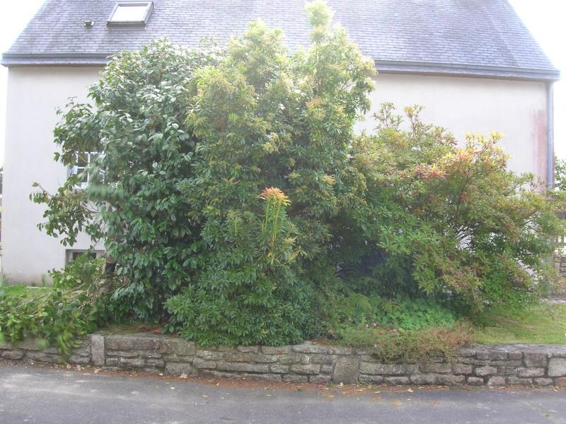 Le jardin de chez mes parents. Dscn1738