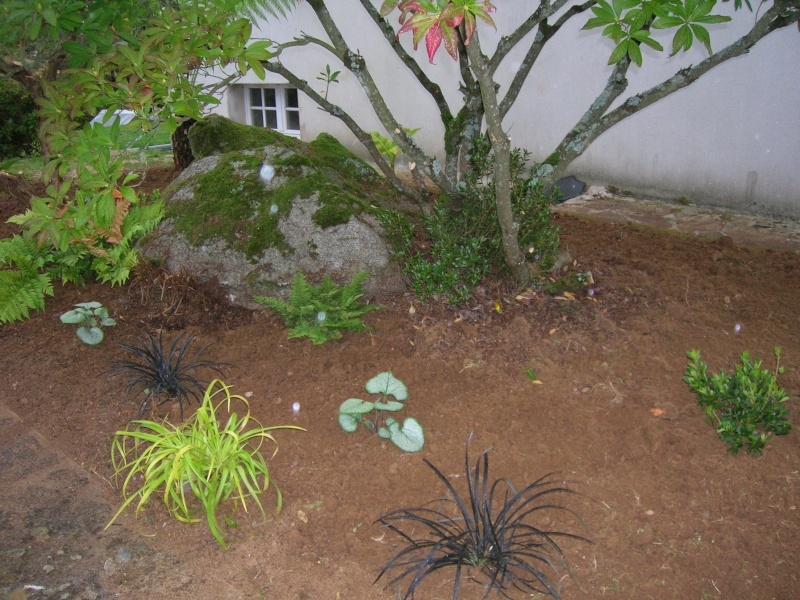 Le jardin de chez mes parents. Dscn1742